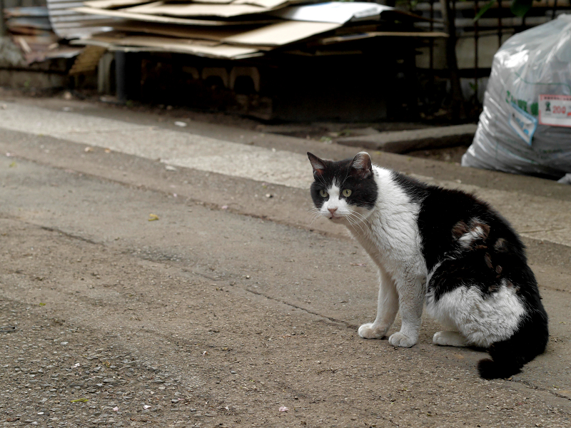 出て来た母猫