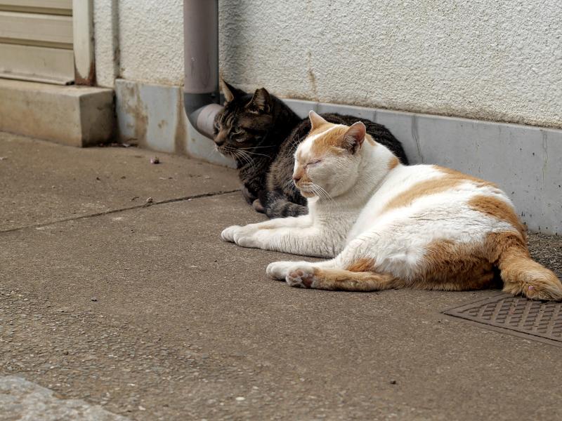 女王猫と銃士猫