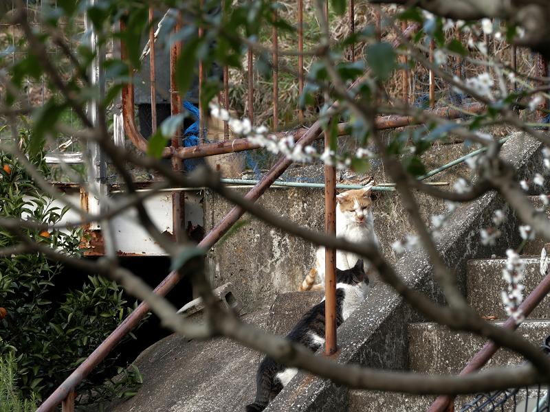 斜面の猫たち1