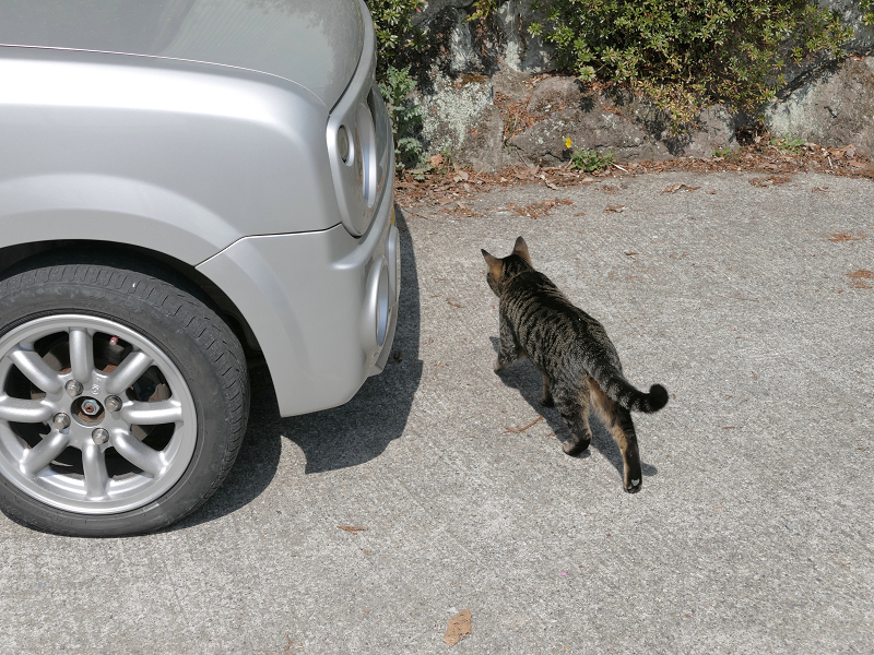 軽自動車とキジトラ猫1