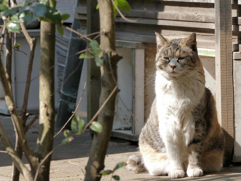 猫道の三毛猫