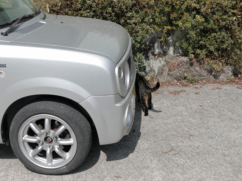 軽自動車とキジトラ猫2