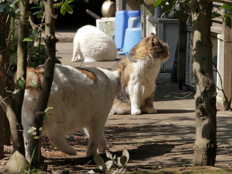 猫道の猫たち