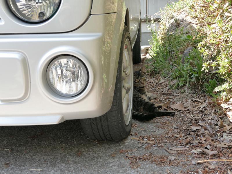 軽自動車とキジトラ猫3