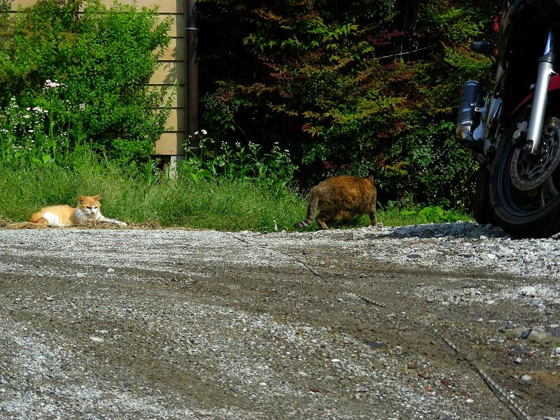 空地の猫たち