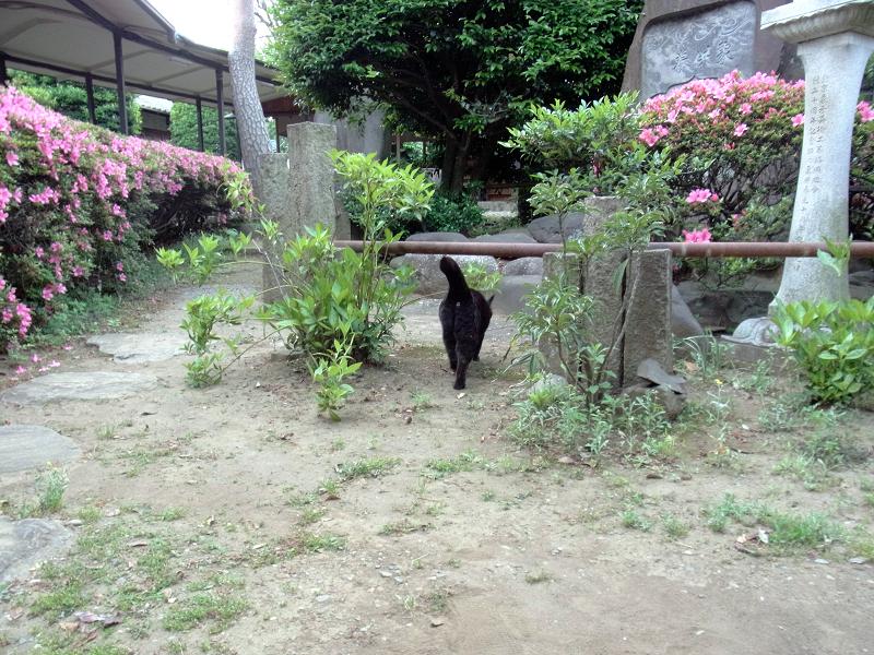 移動する黒猫