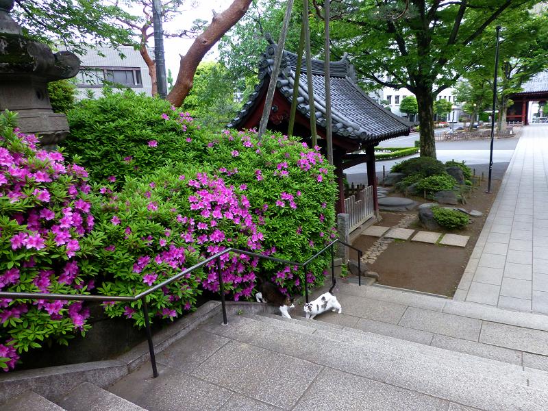大きな階段と猫2