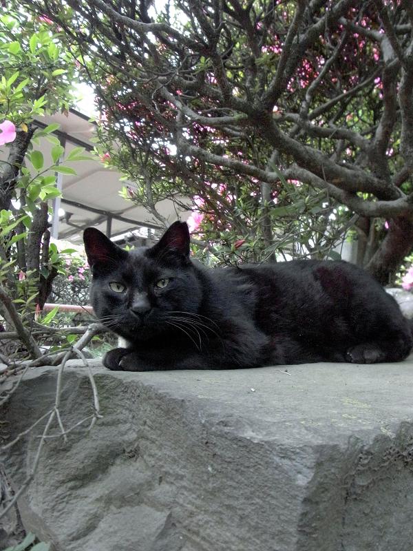 岩に乗った黒猫