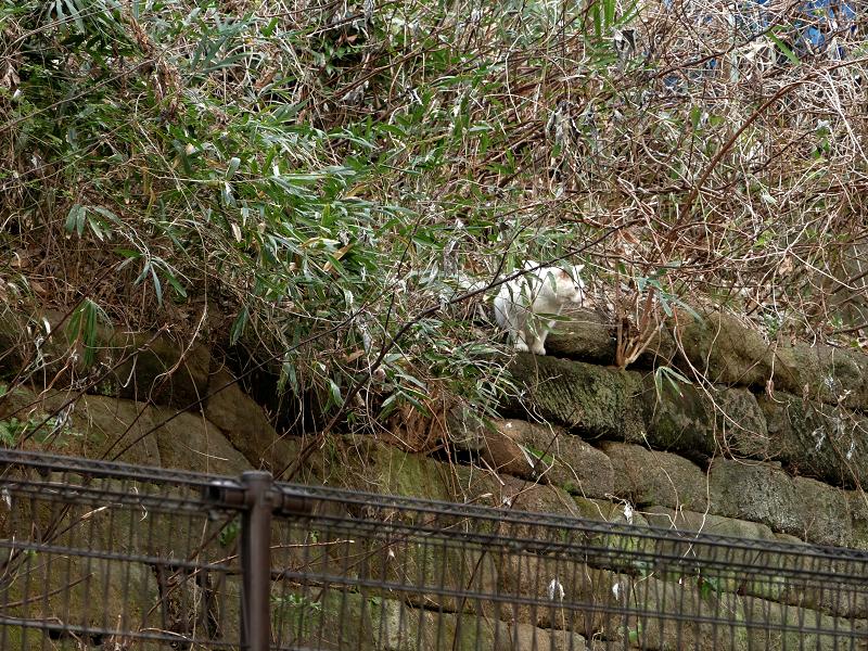 竹やぶの猫