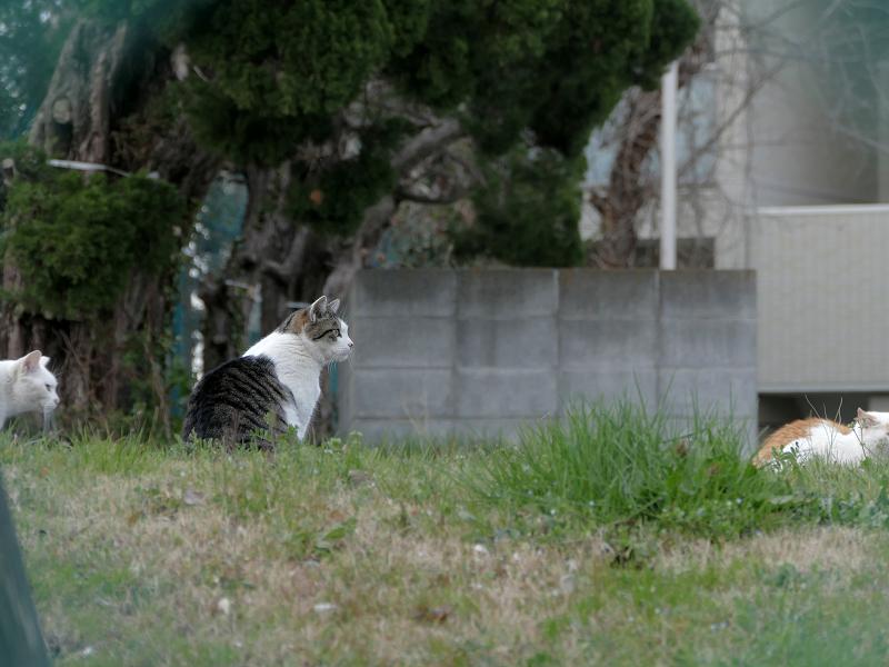 フェンス越しの猫たち1