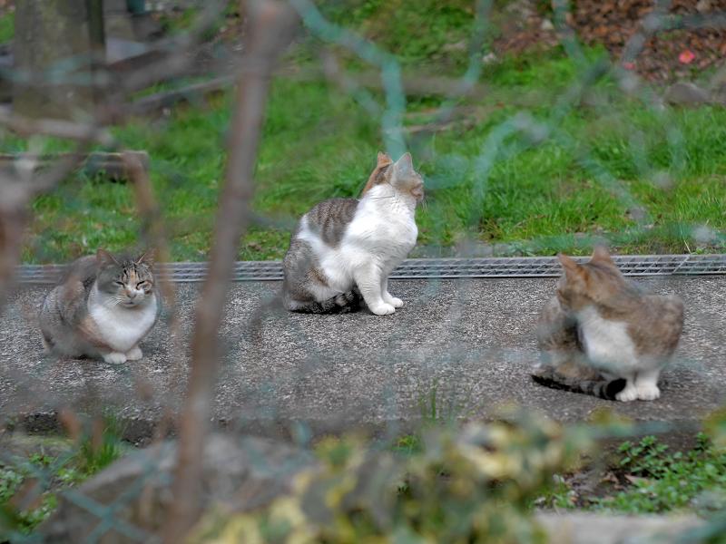 金網の向こうにいる猫3匹1