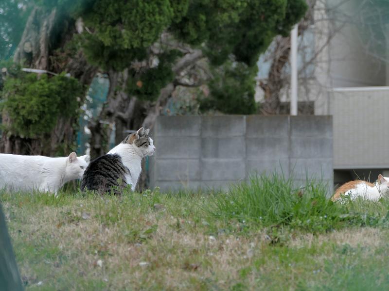 フェンス越しの猫たち2