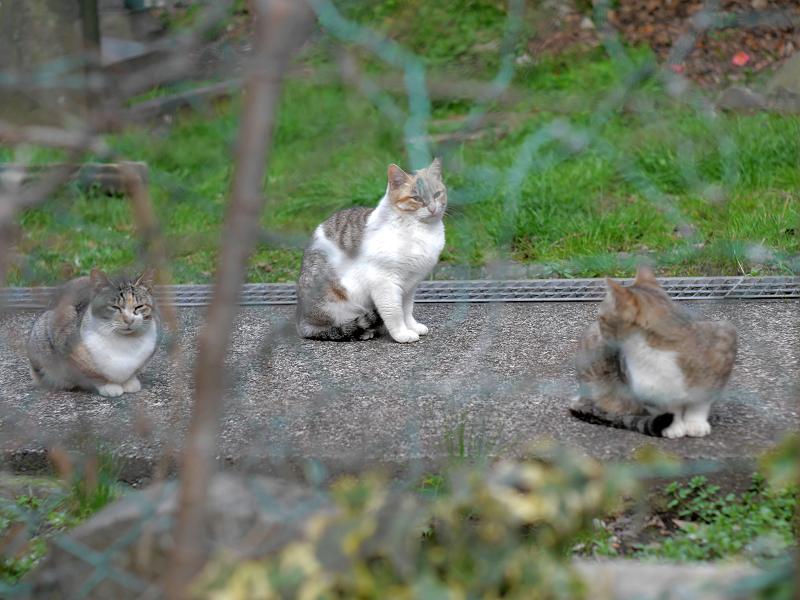 金網の向こうにいる猫3匹2