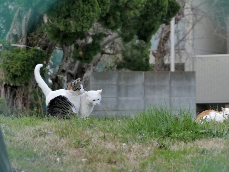 フェンス越しの猫たち3