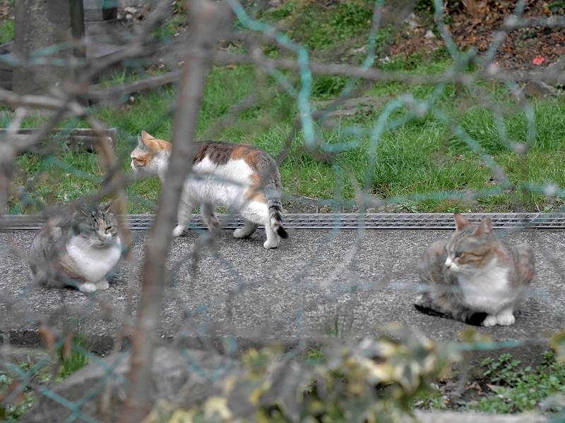 金網の向こうにいる猫3匹3