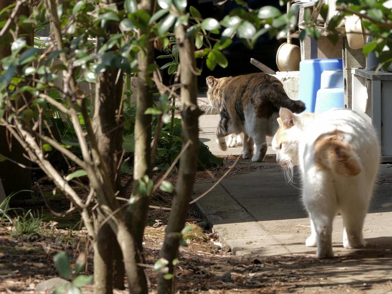 猫道を歩く猫たち1