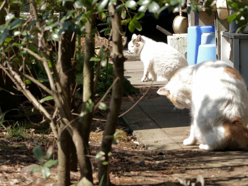 猫道を歩く猫たち2