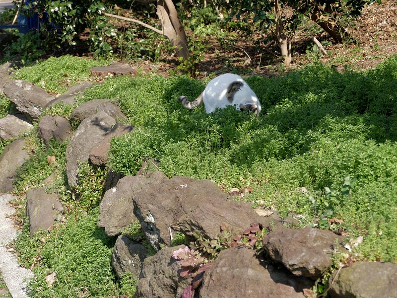 草むらと岩場の白黒猫2