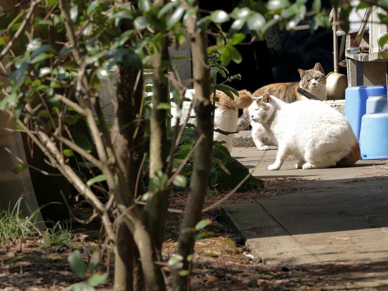 猫道を歩く猫たち3