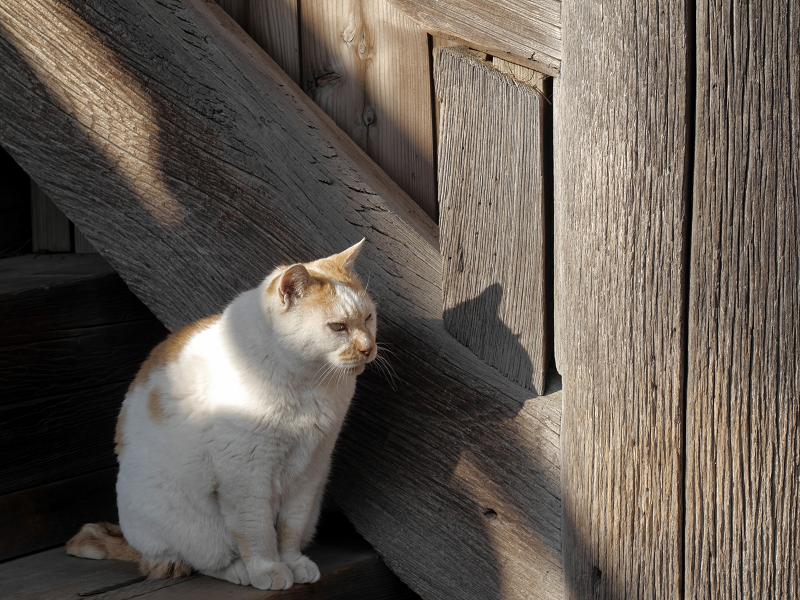 階段の横の白茶猫1