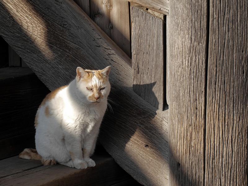 階段の横の白茶猫2
