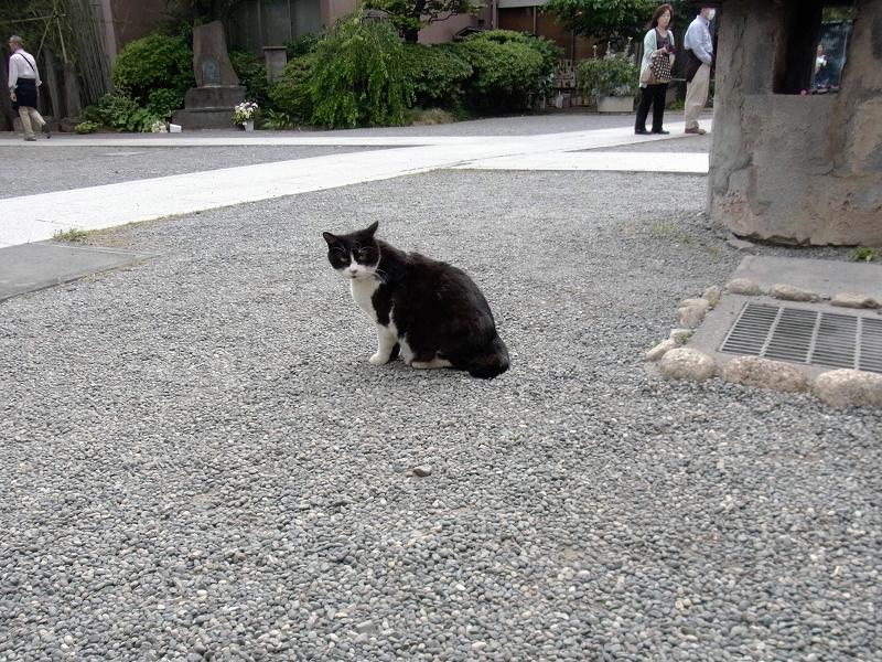 気づくといた黒白猫1