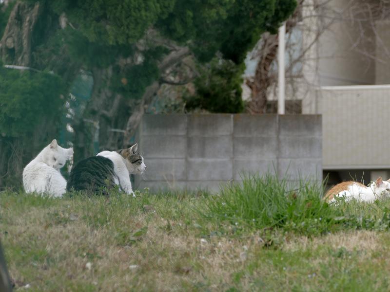 フェンスの向こう側の猫たち1