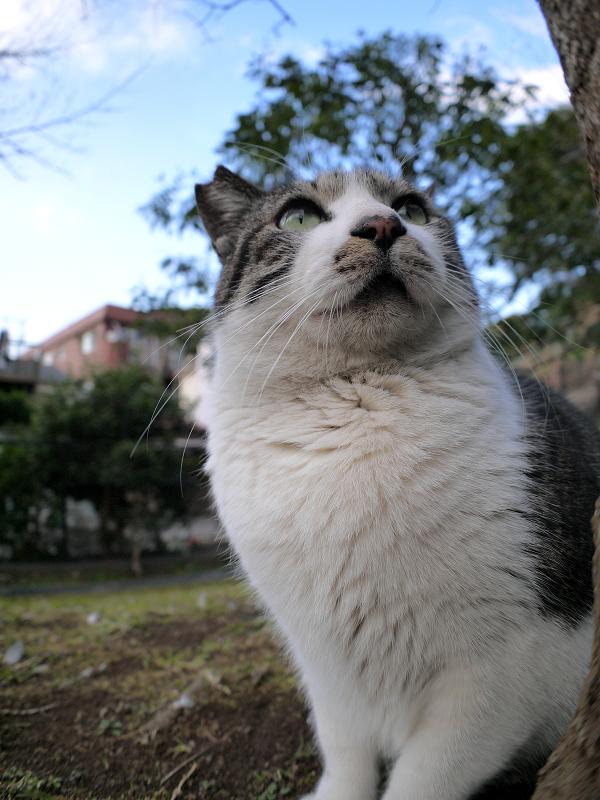 木の横のキジ白猫2