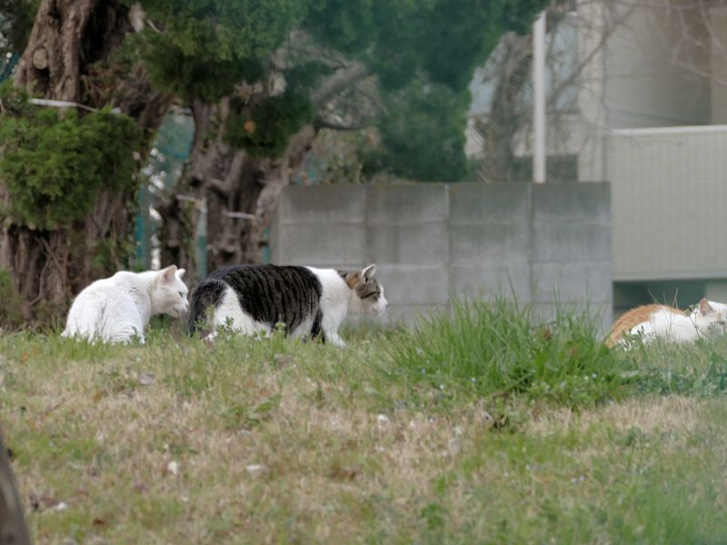 フェンスの向こう側の猫たち2