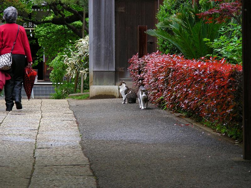赤い色の門前の猫たち1