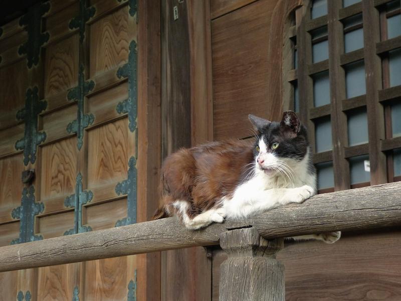 欄干でリズミカルに動く黒白猫3