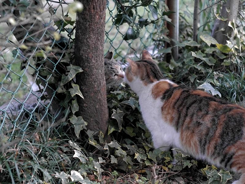 金網越しに出会う猫たち1