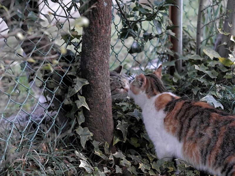 金網越しに出会う猫たち2