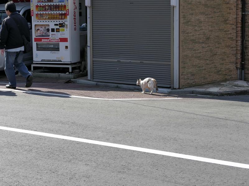 道路をかっ飛ぶ白三毛猫2