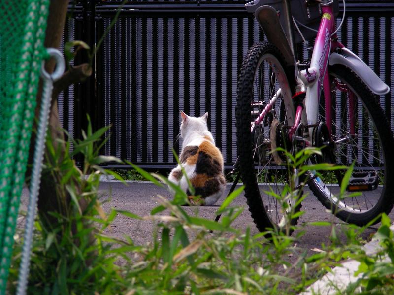 駐車場猫の後ろ姿