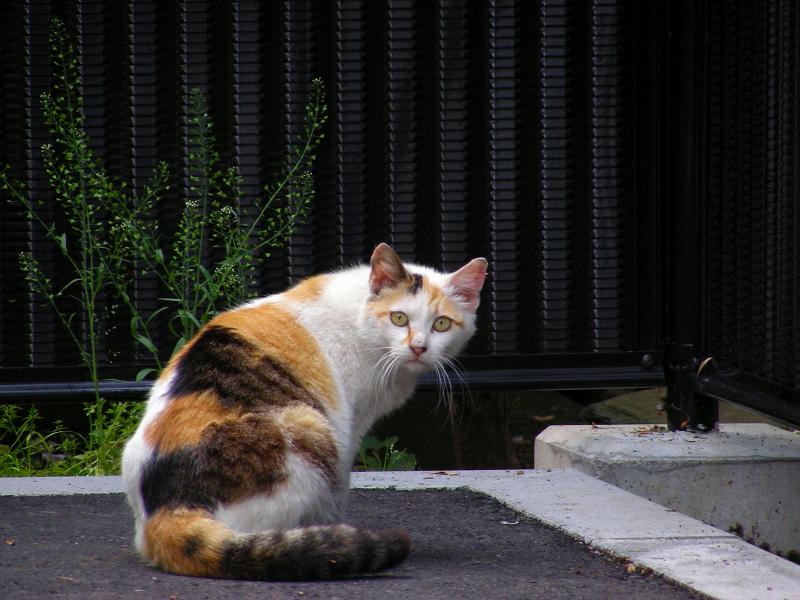 駐車場猫の振り返り
