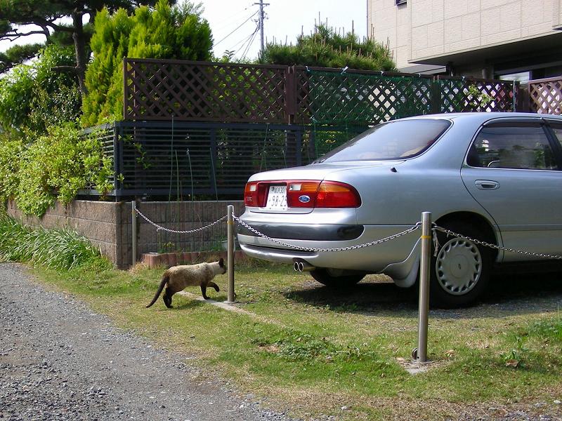町なか駐車場の洋風な猫3