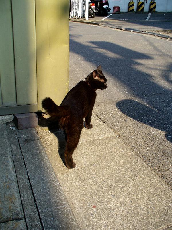 街なかの黒猫1