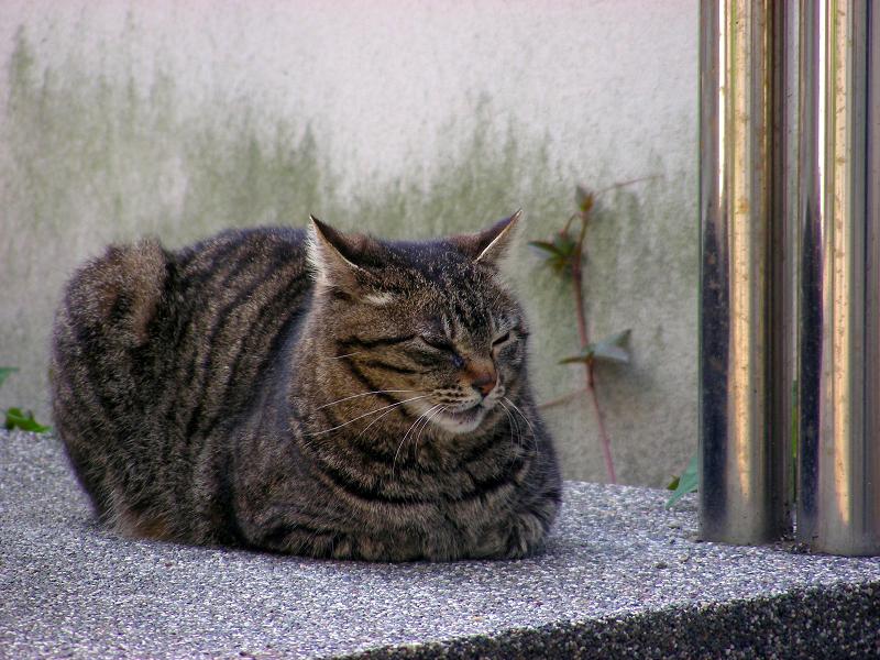 オブジェの横で香箱のキジトラ猫2