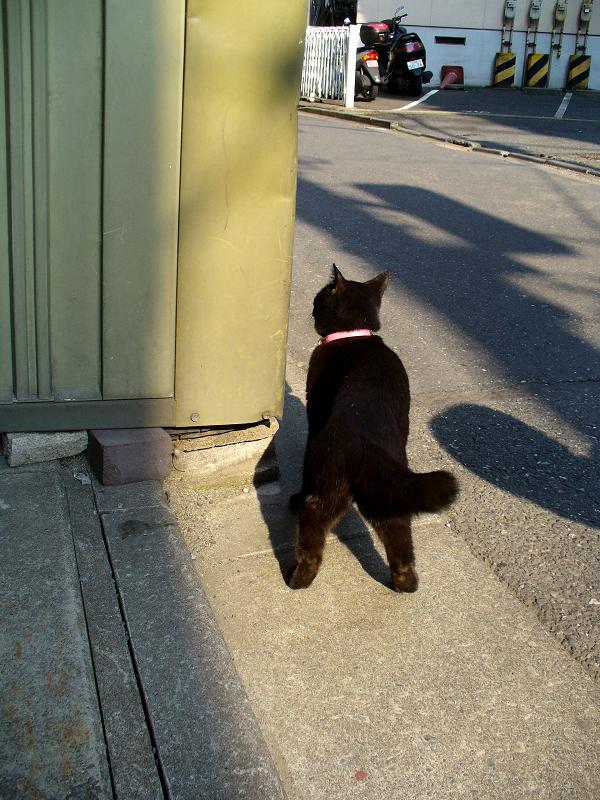 街なかの黒猫2