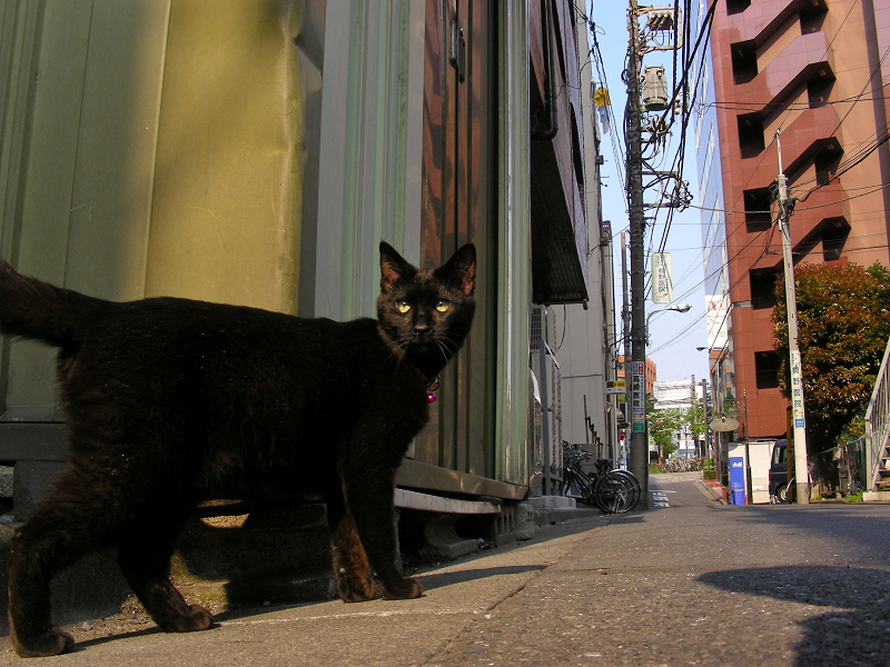 街なかの黒猫3