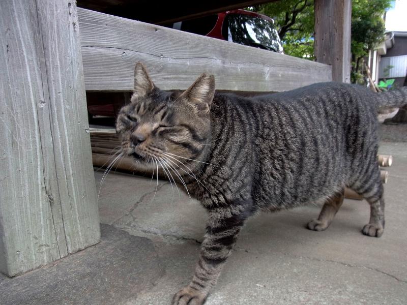 やって来るキジトラ猫2