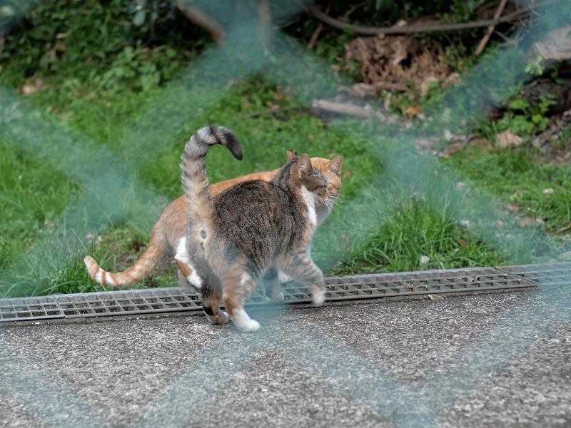 金網の向う側の仲良しな猫たち2