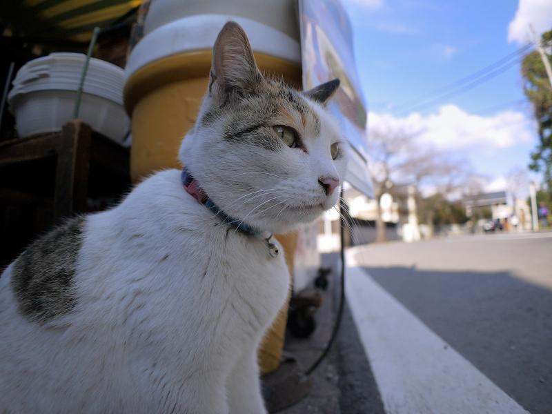 お店前の白三毛猫2