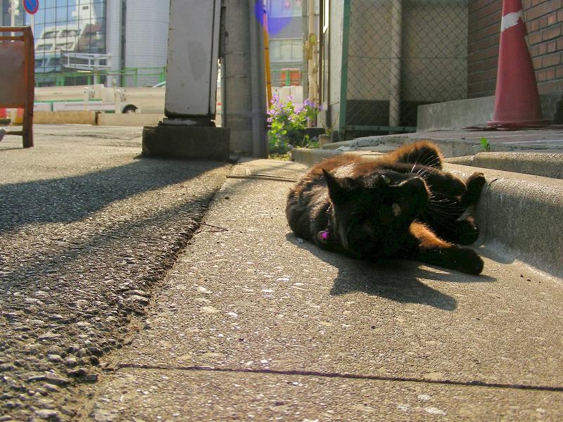 街なか縁石で転がる黒猫1