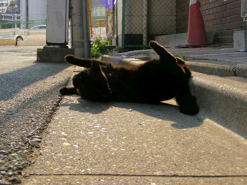 街なか縁石で転がる黒猫2
