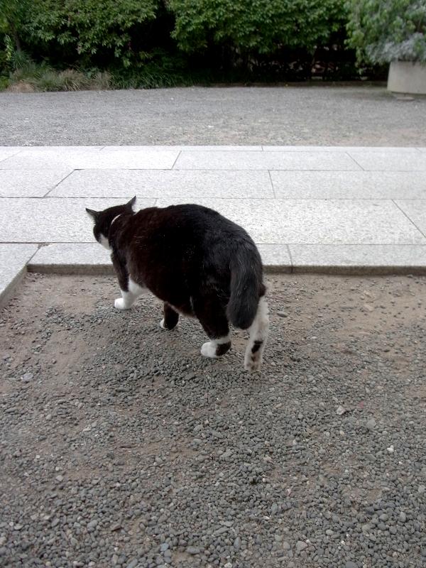 いつの間にかいた黒白猫1