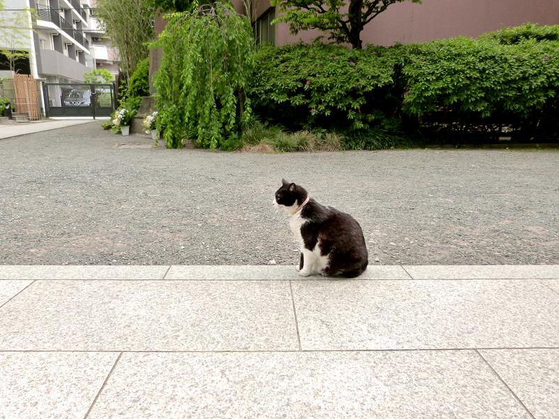 いつの間にかいた黒白猫2
