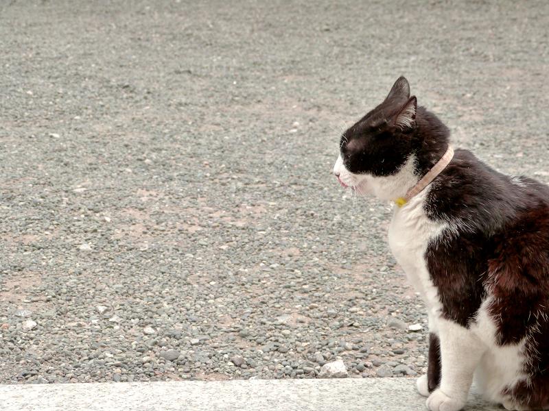 いつの間にかいた黒白猫3