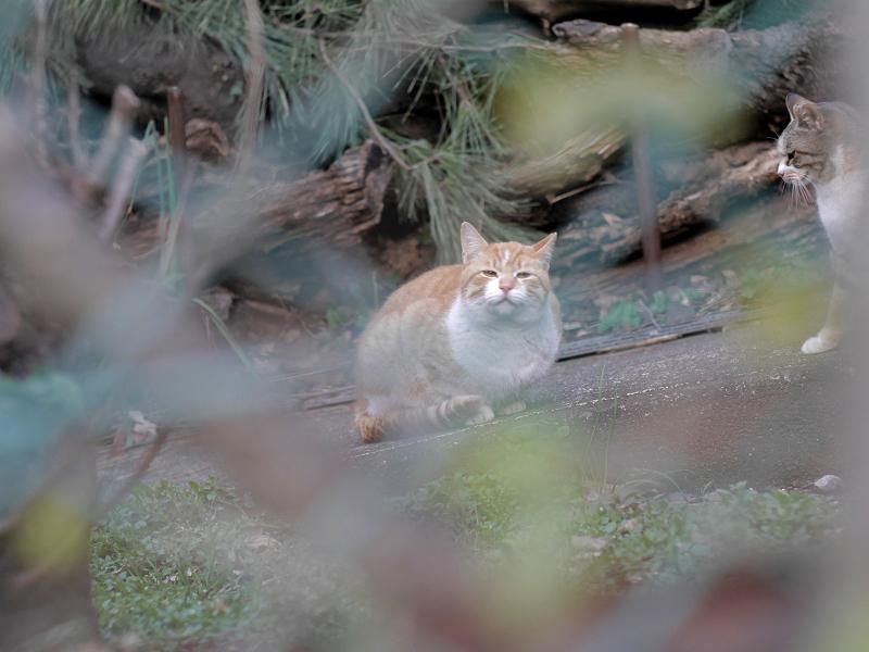 金網の向う側のスロープの猫たち1